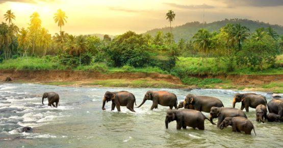 Herde von Elefanten zu Fuß in einem Dschungel Fluss