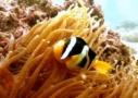 Sri Lanka Tauchen - der kleine Fisch Devsiri Pejris