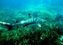 Sri Lanka Tauchen - Haie aus der Nähe beobachten