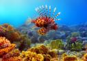 Tauchen in Sri Lanka - Unterwasserwelt hautnah erleben