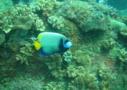 Tauchen in Sri Lanka mit den Tauchlehrer von PADI und SSI - ab 8m bis 30m den Meeresgrund erforschen