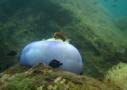 Sri Lanka Tauchen - Meeresgrund aus der Nähe erleben. Tauchen Sie ein