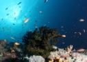 Sri Lanka Tauchen - die Vielfalt der Unterwasserwelt Fischschwarm bewundern