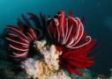 Sri Lanka Tauchen - die Vielfalt der Unterwasserwelt