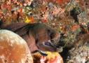 Tauchen in Sri Lanka - am Meeresgrund